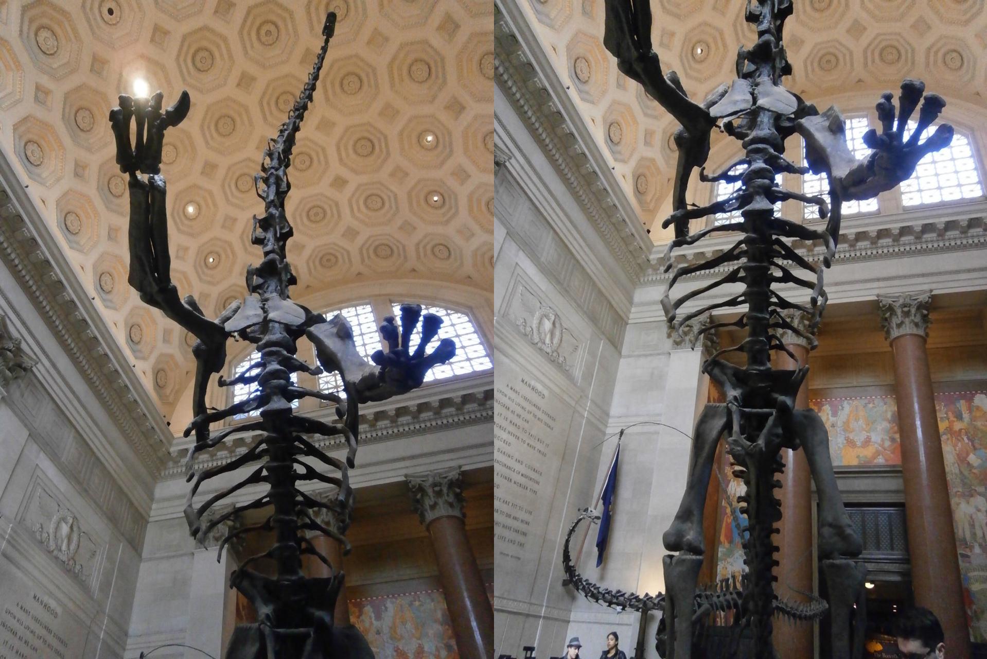 アメリカ自然史博物館 首長竜