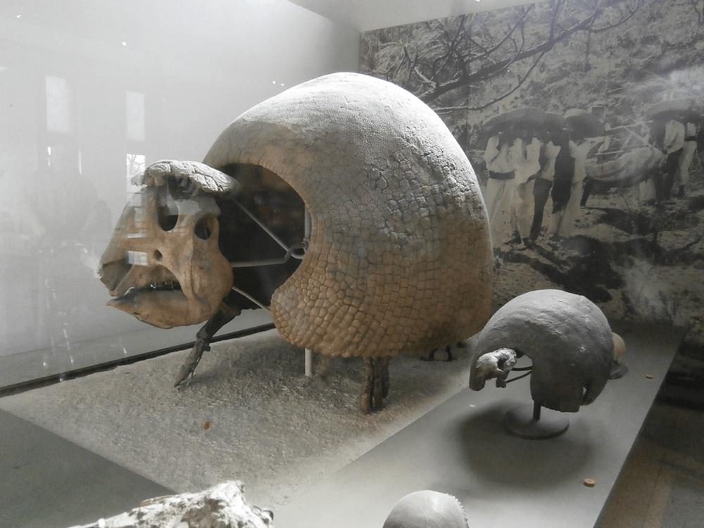 巨大アルマジロ アメリカ自然史博物館