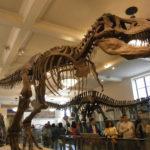 女子1人ニューヨーク放浪記④〜アメリカ自然史博物館〜(写真多数)