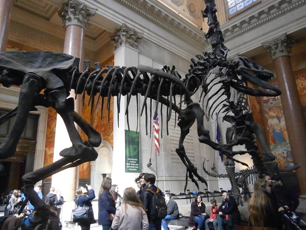 アメリカ自然史博物館 ティラノサウルス